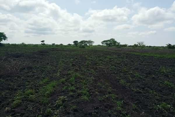CUSTOMARY LAND TENURE IN UGANDA